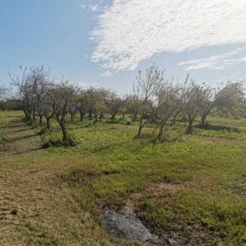 Terreno agricolo in Vendita - Rif.  11.112 - 07/10/2020
