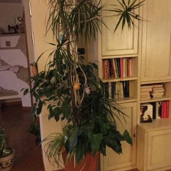 Vaso con 4 tipologie di piante
