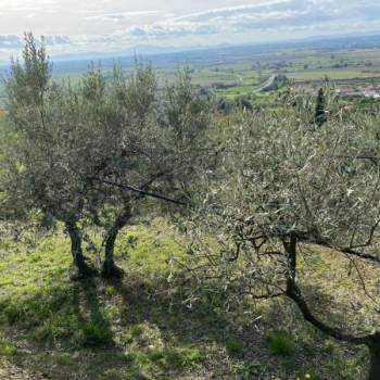 Terreno in vendita a Cortona (AR)