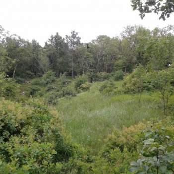 Terreno in vendita a Sgonico (TS)