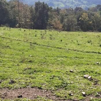 Terreno in vendita a Caronia (ME)