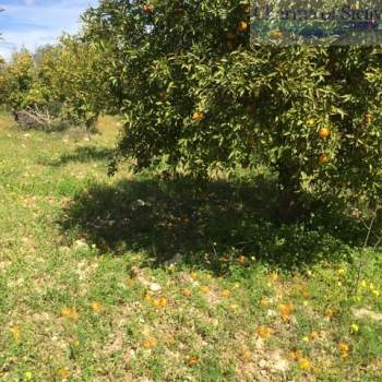 Terreno in vendita a Rosolini (SR)