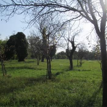 TERRENO EDIFICABILE a Vittorio Veneto