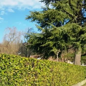 Terreno in vendita a Dueville (Vicenza)