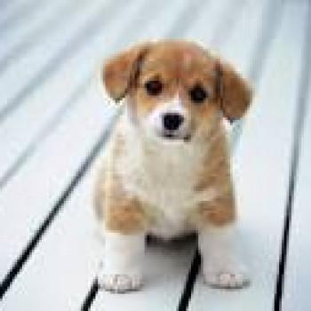 Cerco cucciolo di cane, anche meticcio